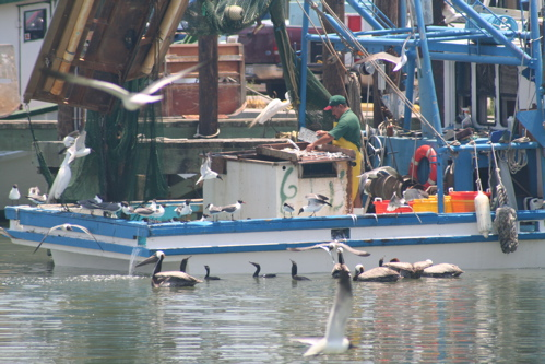 Galveston harbor birds for Galveston fishing party boats